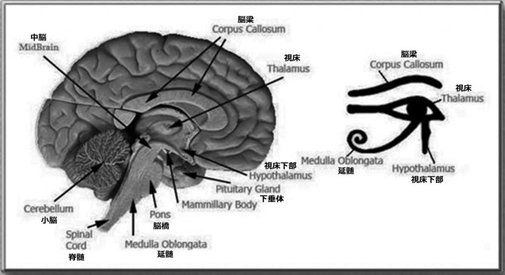 2 6 4 brain-of-horus-jp