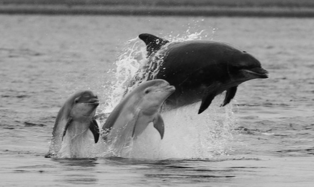 クジラ類は、